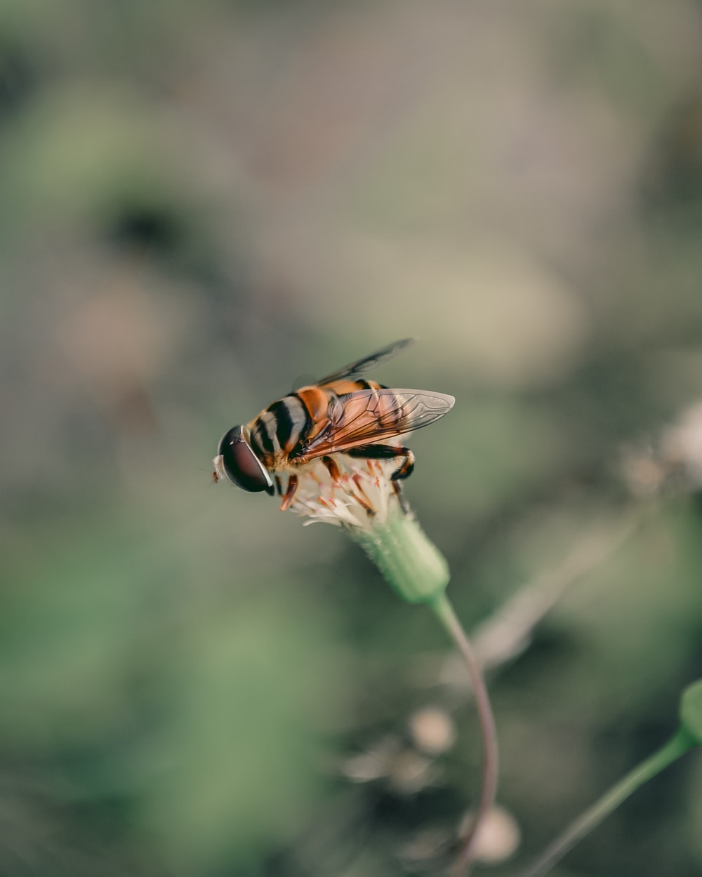 yellow and black bee on green plant