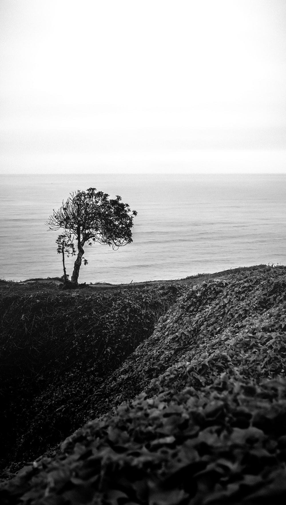 grayscale photo of tree on hill near body of water
