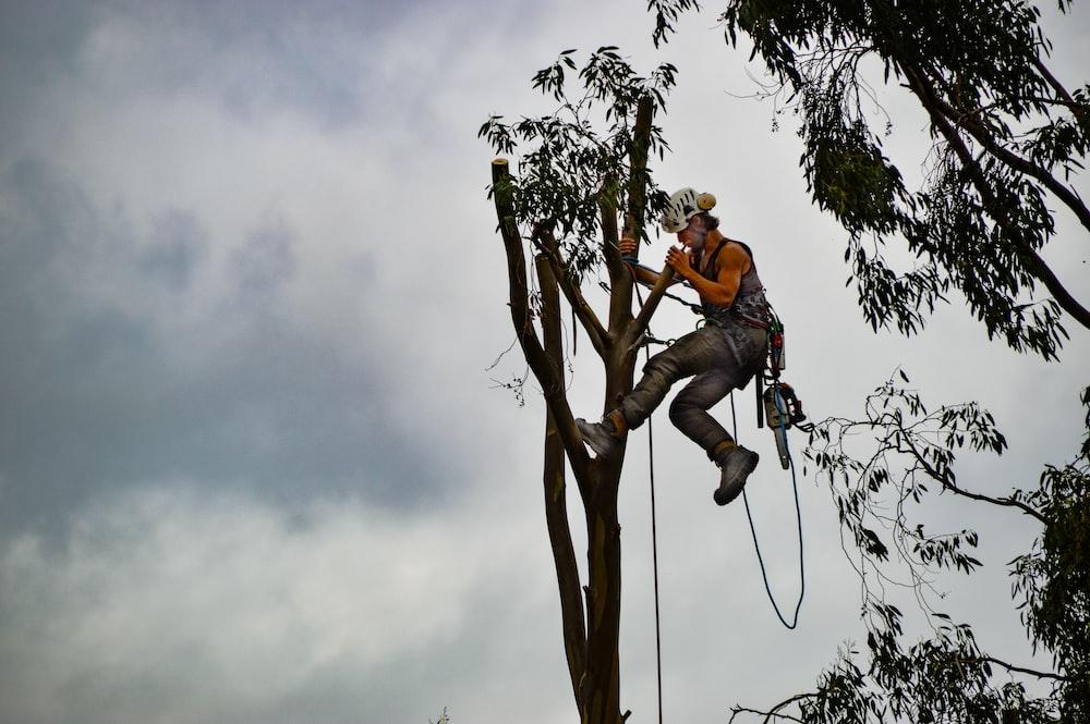 man in orange shirt sitting on tree branch