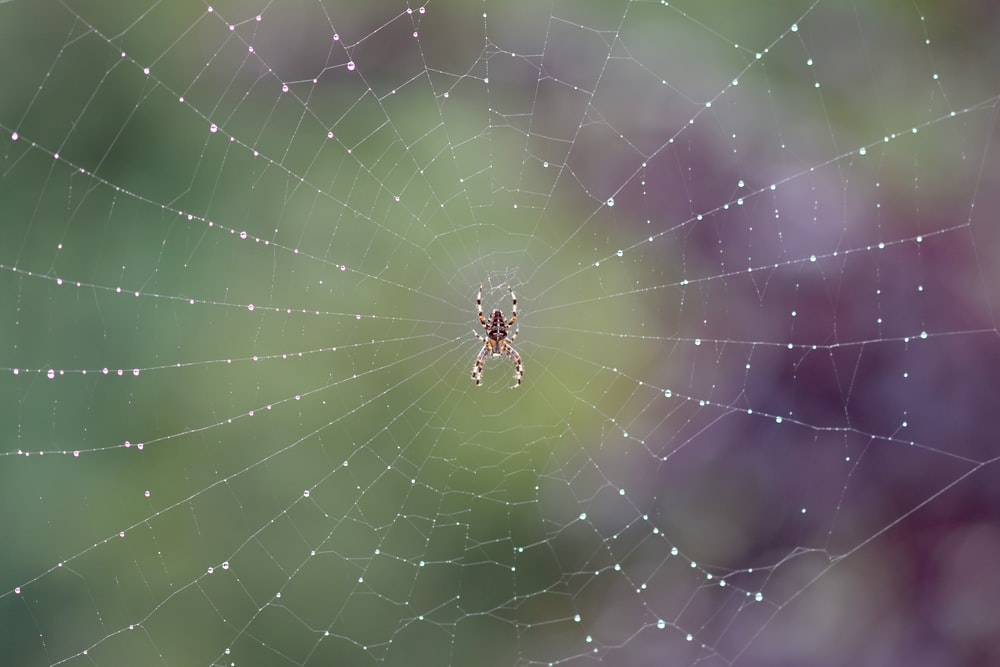 brown spider on spider web in close up photography