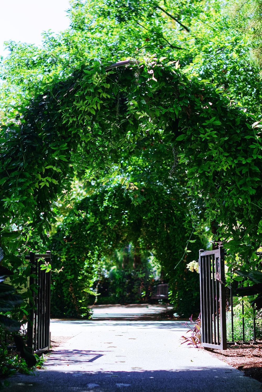 green trees beside black metal gate during daytime