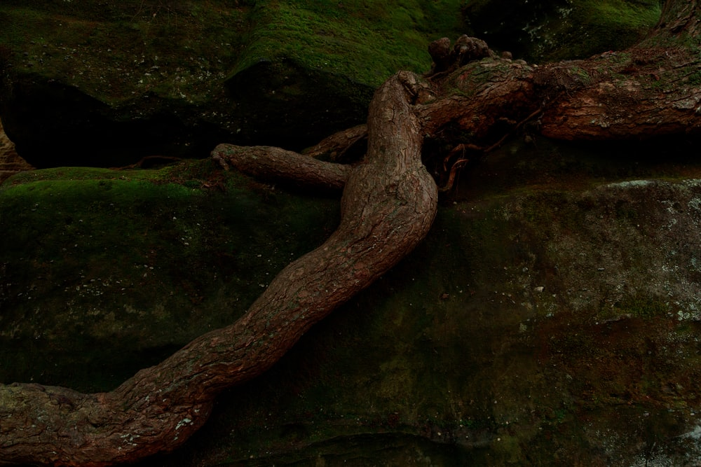 brown tree trunk on green moss