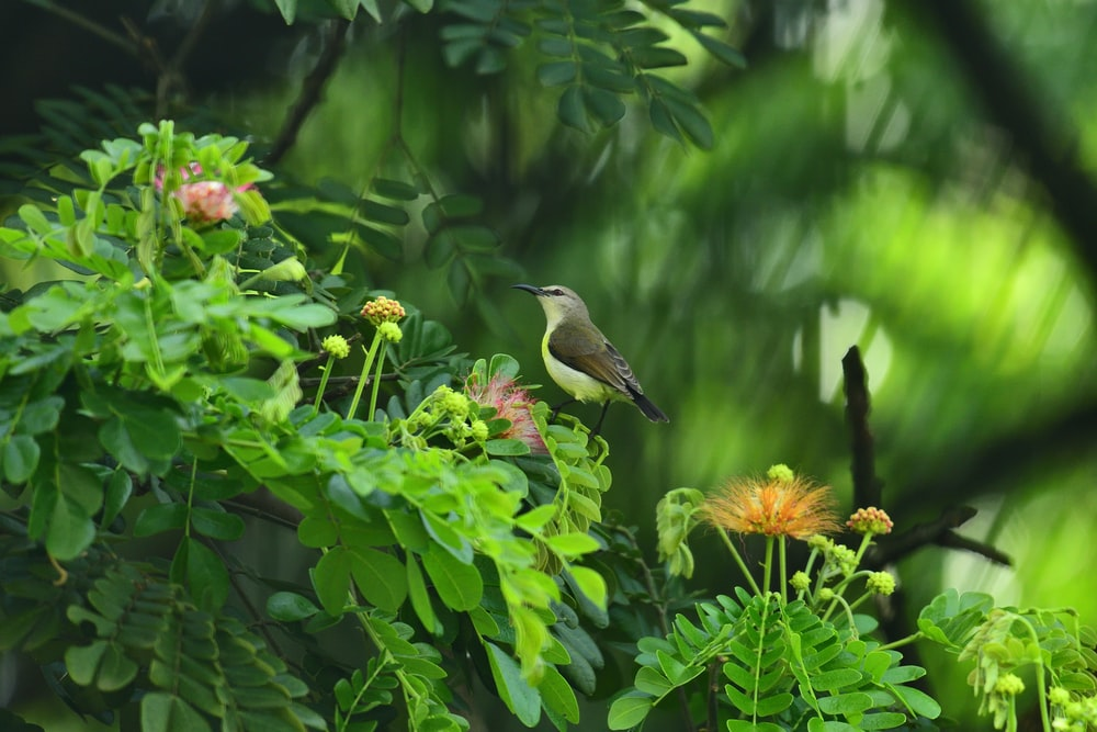 brown and black humming bird on yellow flower