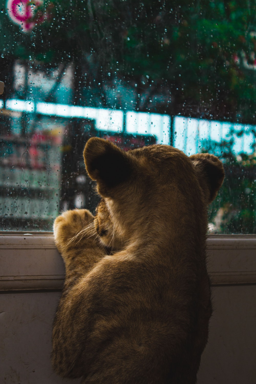 brown lioness on window during daytime