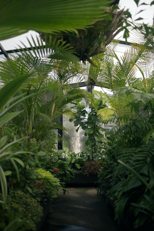 green leaf plants inside greenhouse