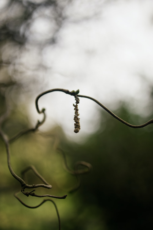 water dew on black metal wire