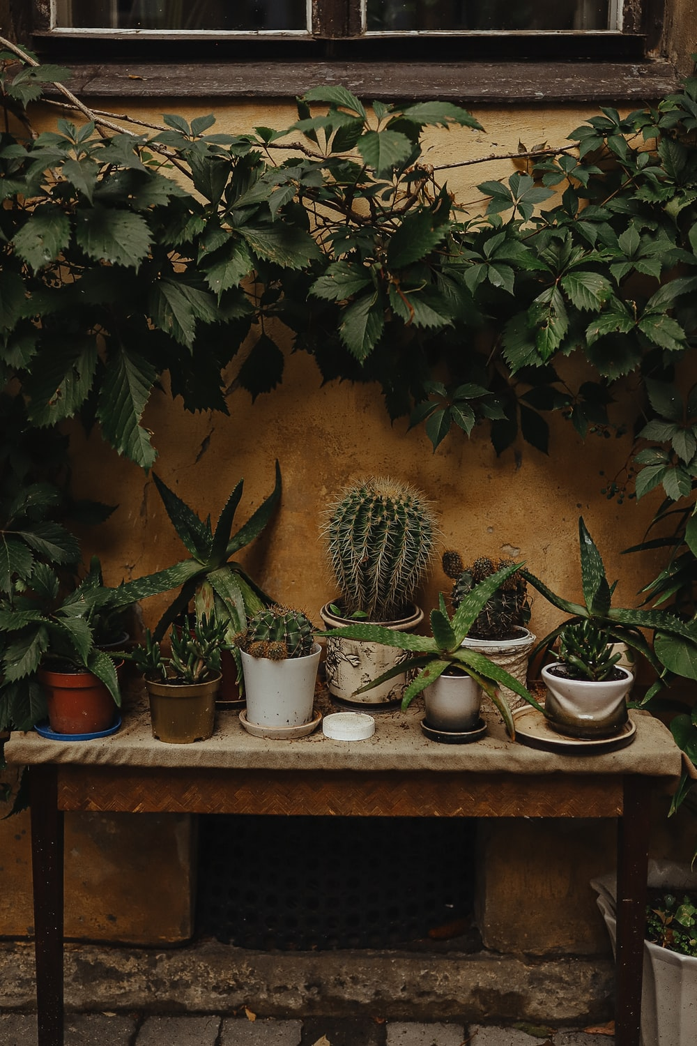 green cactus plants on brown wooden table