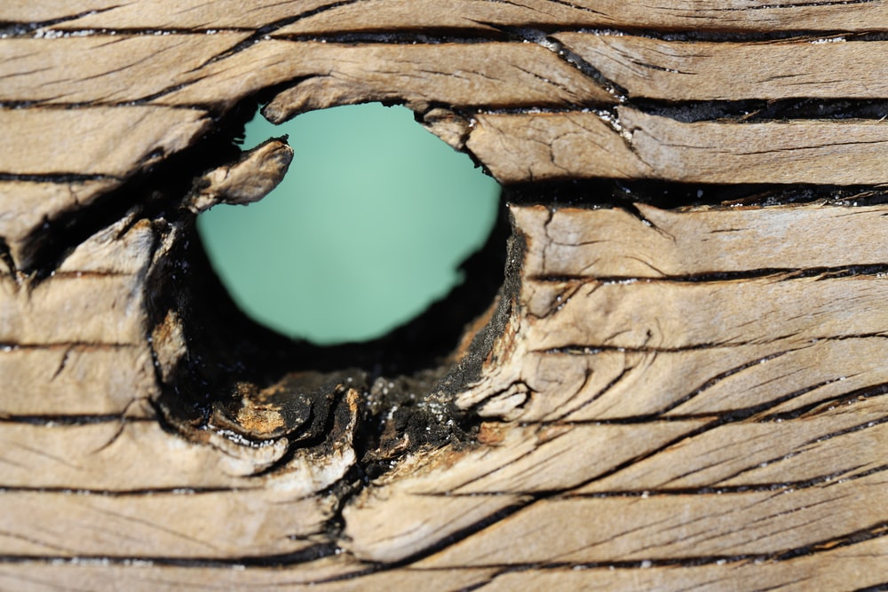brown wooden tree trunk with hole