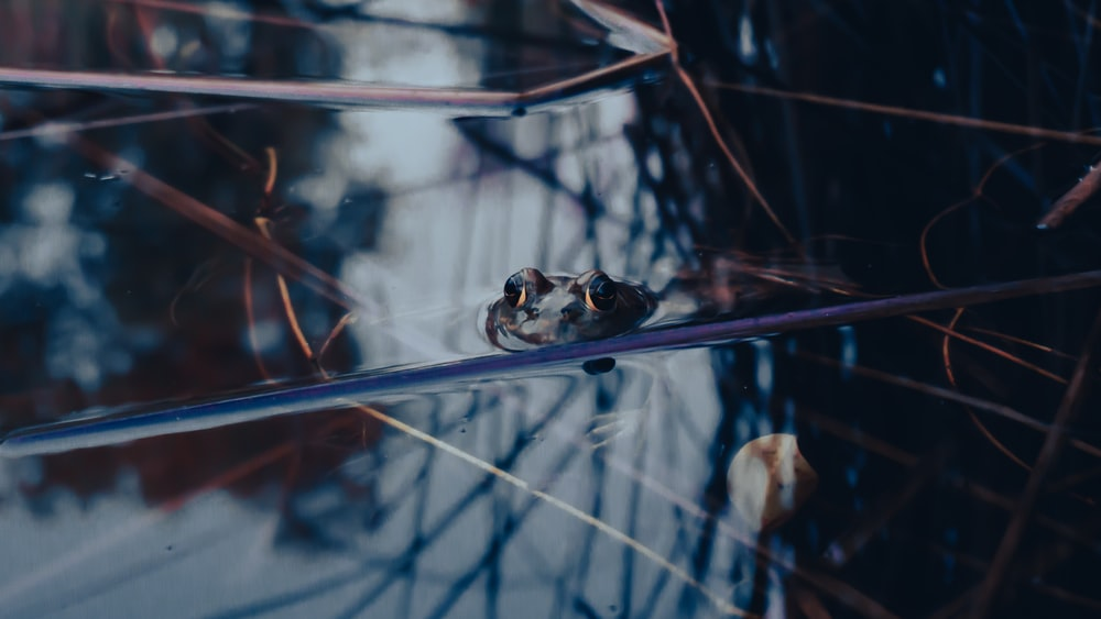 white and black frog on clear glass