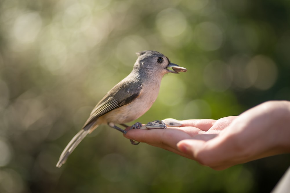 brown and gray bird on persons hand