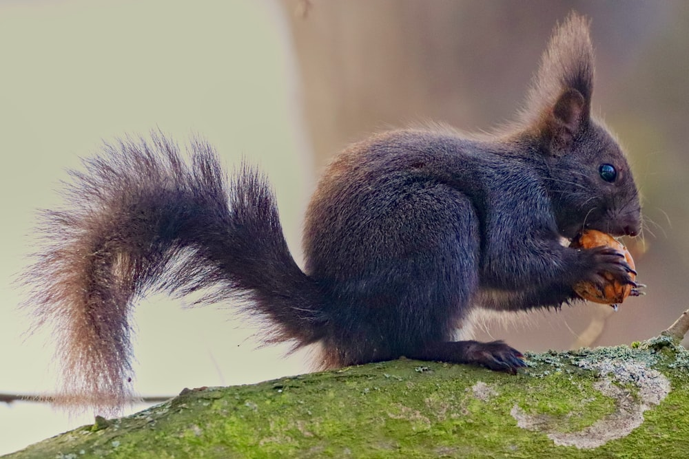 brown squirrel on green moss