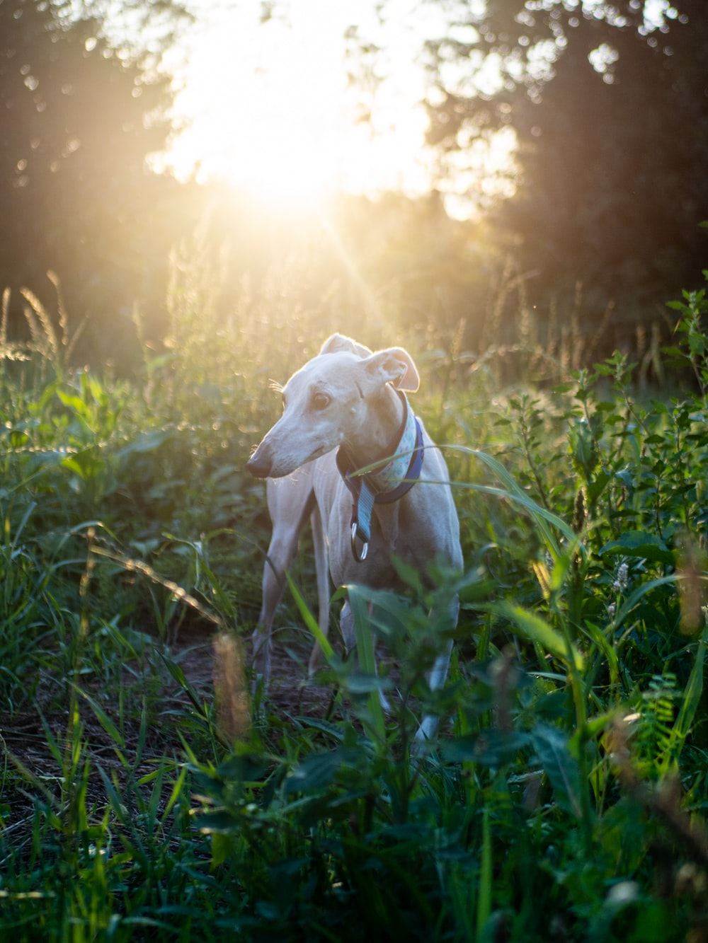 white short coat medium sized dog on green grass during daytime