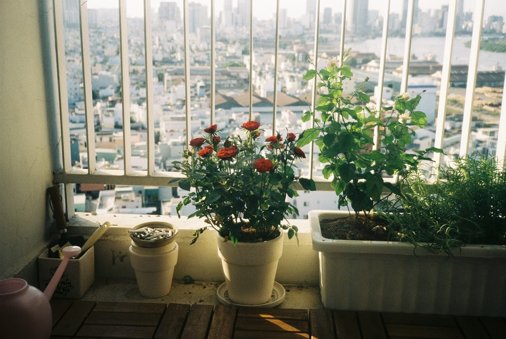 red flowers on white ceramic pots