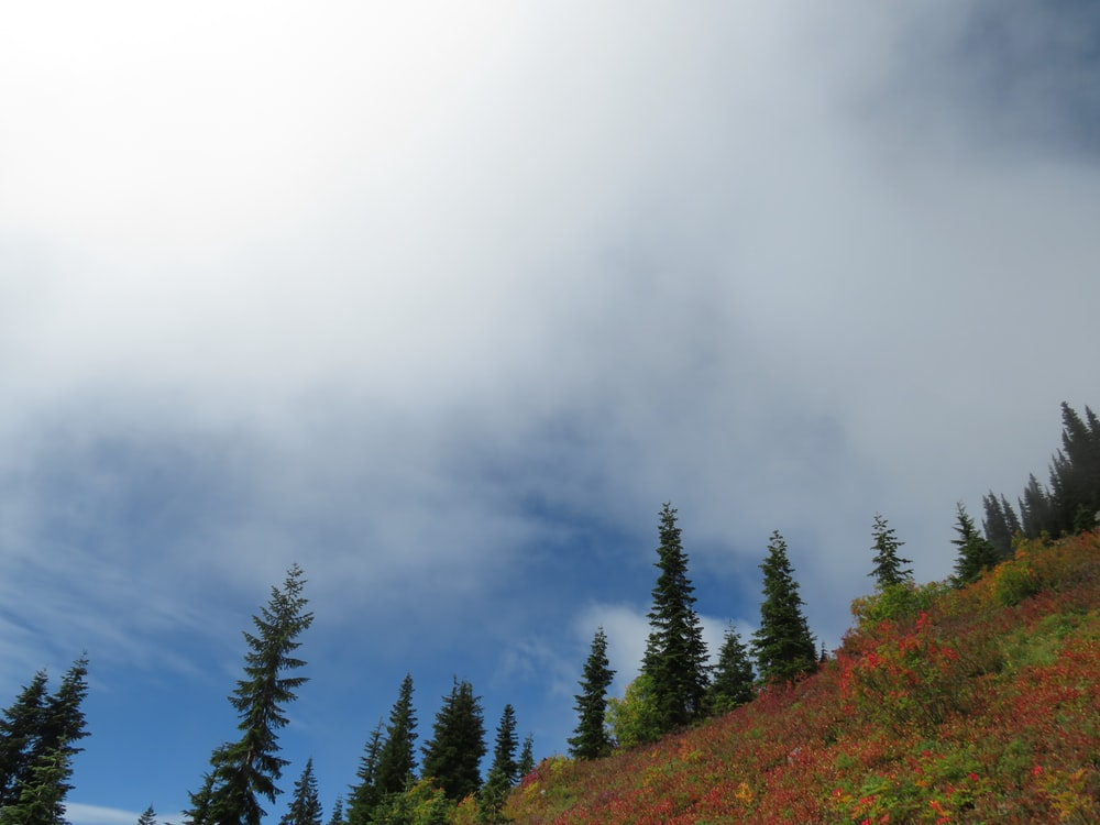 green pine trees on hill under white clouds