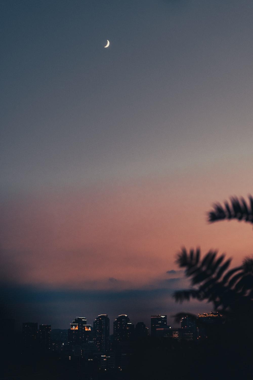 palm tree under gray sky