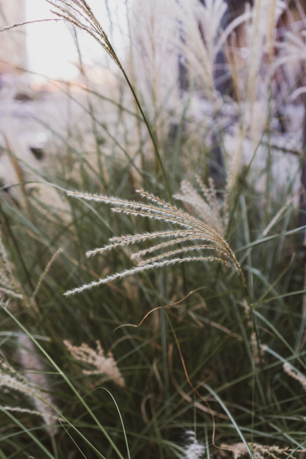 green wheat plant during daytime
