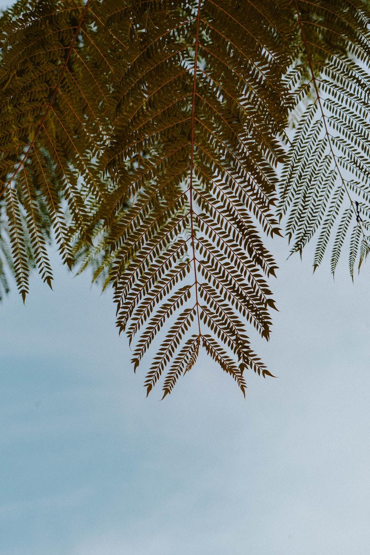 green palm tree under white sky