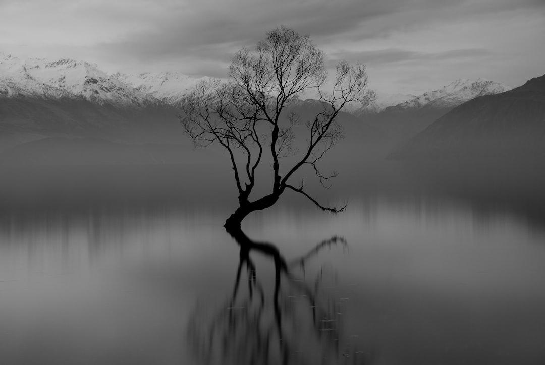 Still Long Exposure of the Wanaka Tree. - unsplash