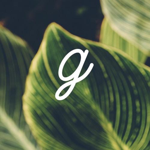 Avatar of user Gardenly