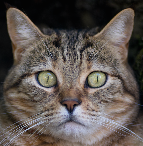 Avatar of user Cat Mapper (Max Ogden)