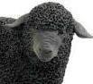 Go to BLACK SHEEP's profile