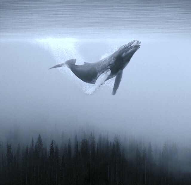Avatar of user Fallen Whale