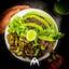 Avatar of user Flux Vegan Lunch