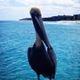 Avatar of user Pelican Drones