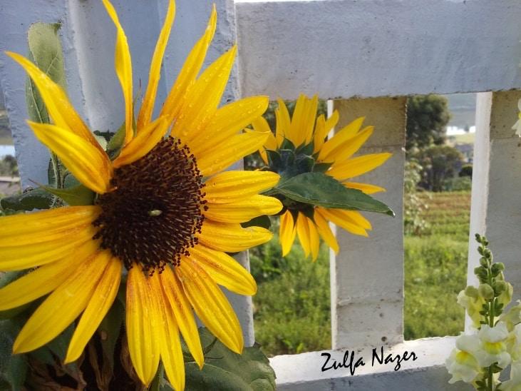 Go to Zulfa Nazer's profile