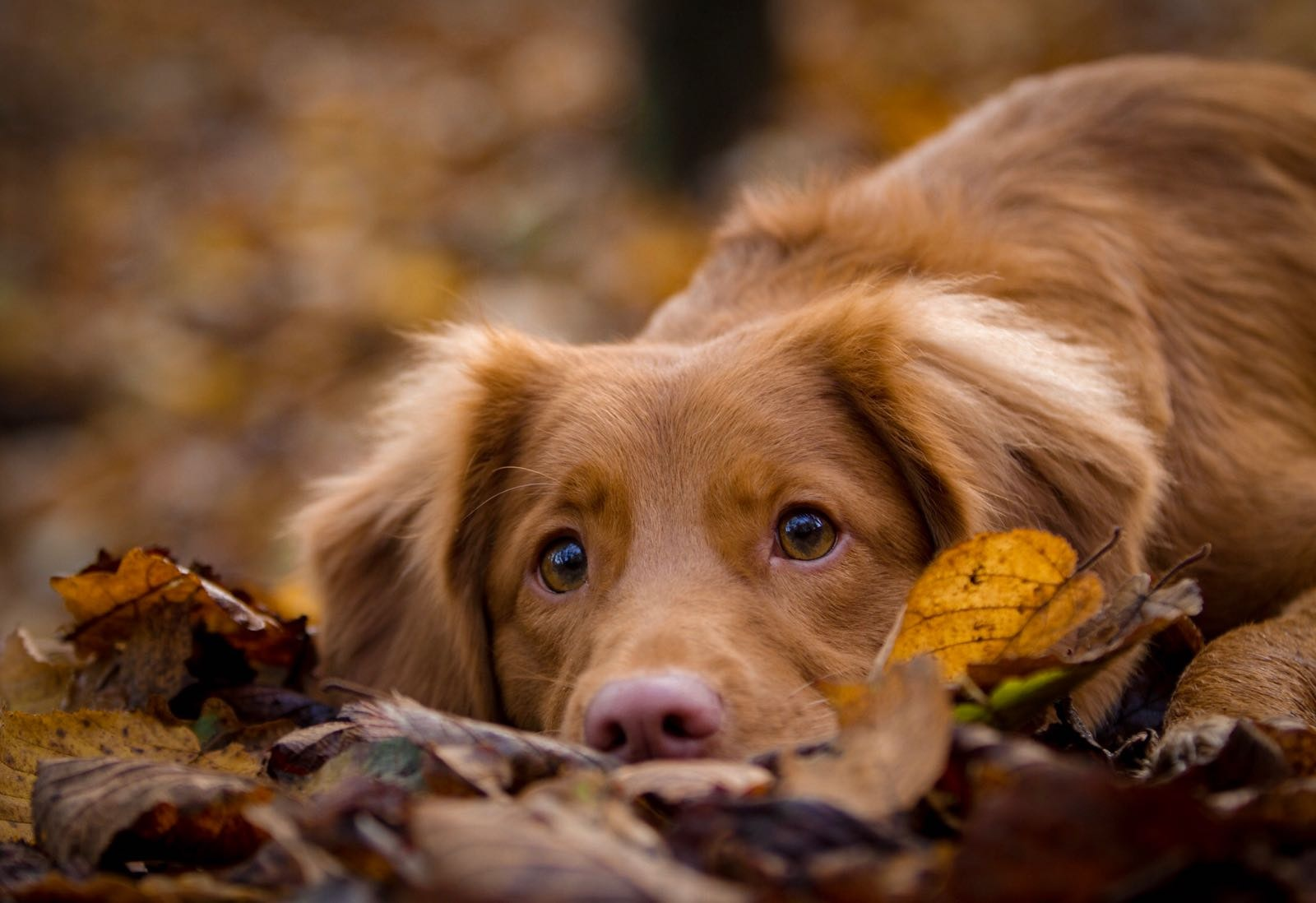 Go to Laula The Toller's profile