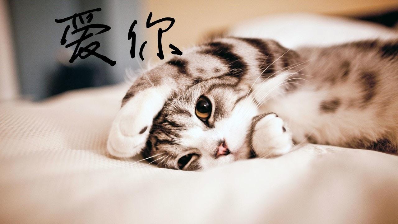 Go to 瑶瑶 张's profile