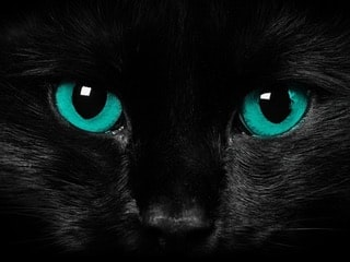 Go to Panther 24960's profile