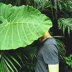 Avatar of user Jaison Lin