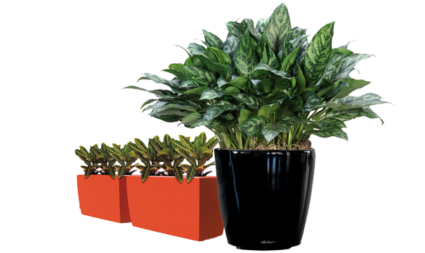 Avatar of user Foliage Indoor Plant Hire