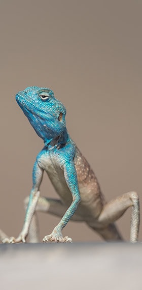 Go to Blue Lizard's profile
