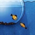 Avatar of user fisheyes fisheyes