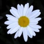 Avatar of user Coco Rose Puren- Wilter