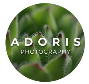 Go to Dorelys Smits's profile