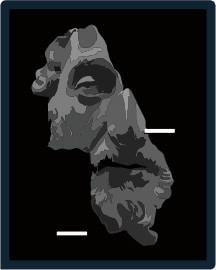 Avatar of user Dionisius Wisnu