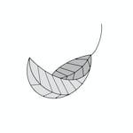 Avatar of user Silver Birch