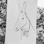 Avatar of user Street Donkey