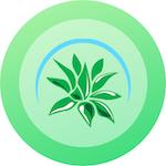 Avatar of user Succulent Market