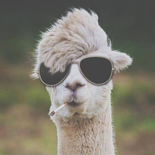 Go to Alpaca Flighty's profile