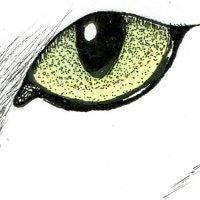 Go to Sara Ferreira's profile