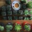 Avatar of user Plant House