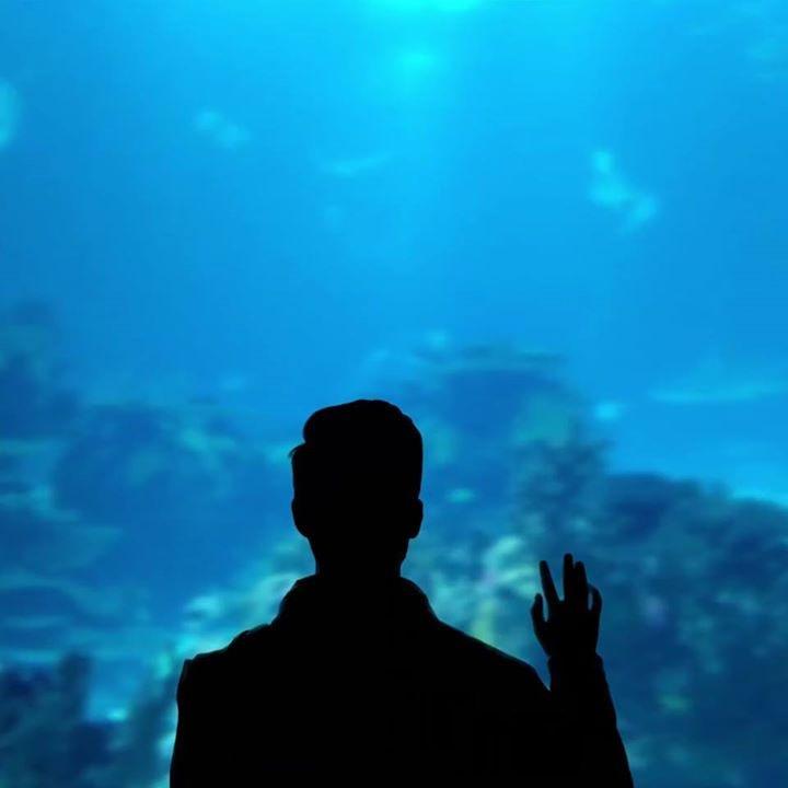 Avatar of user João Monteiro