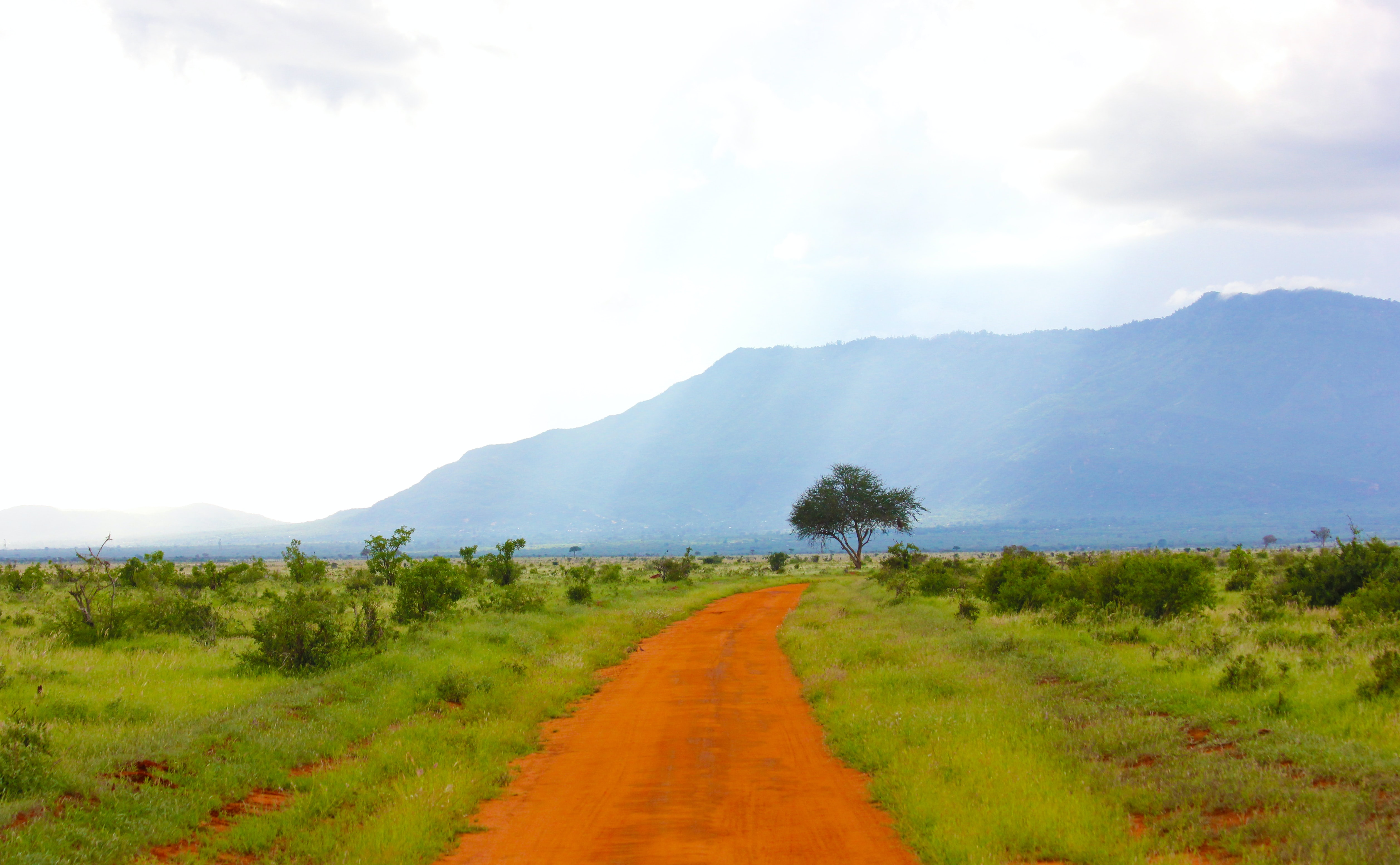 empty footpath with tress under mountain