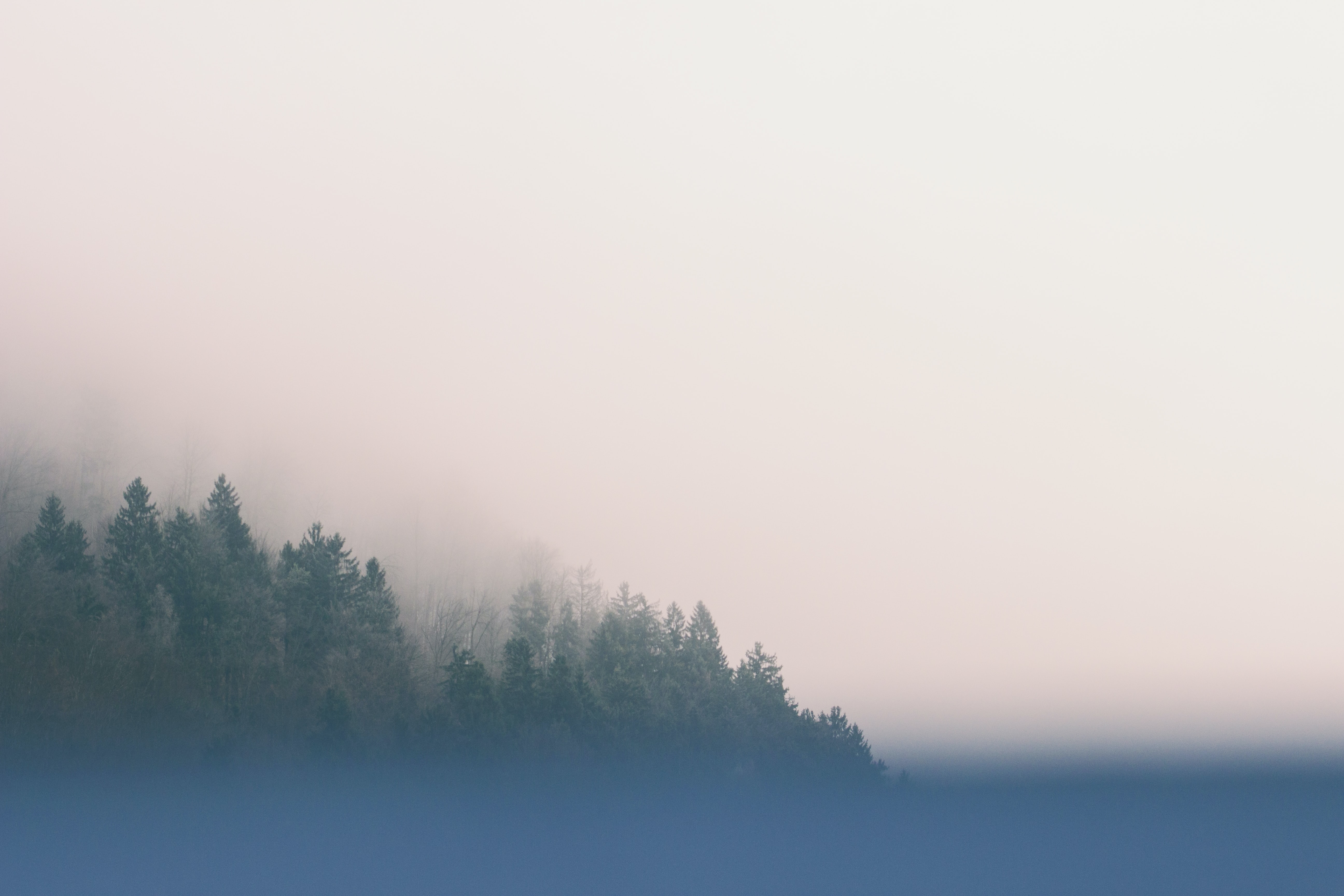 A hazy shot of a forest shrouded in a thick mist