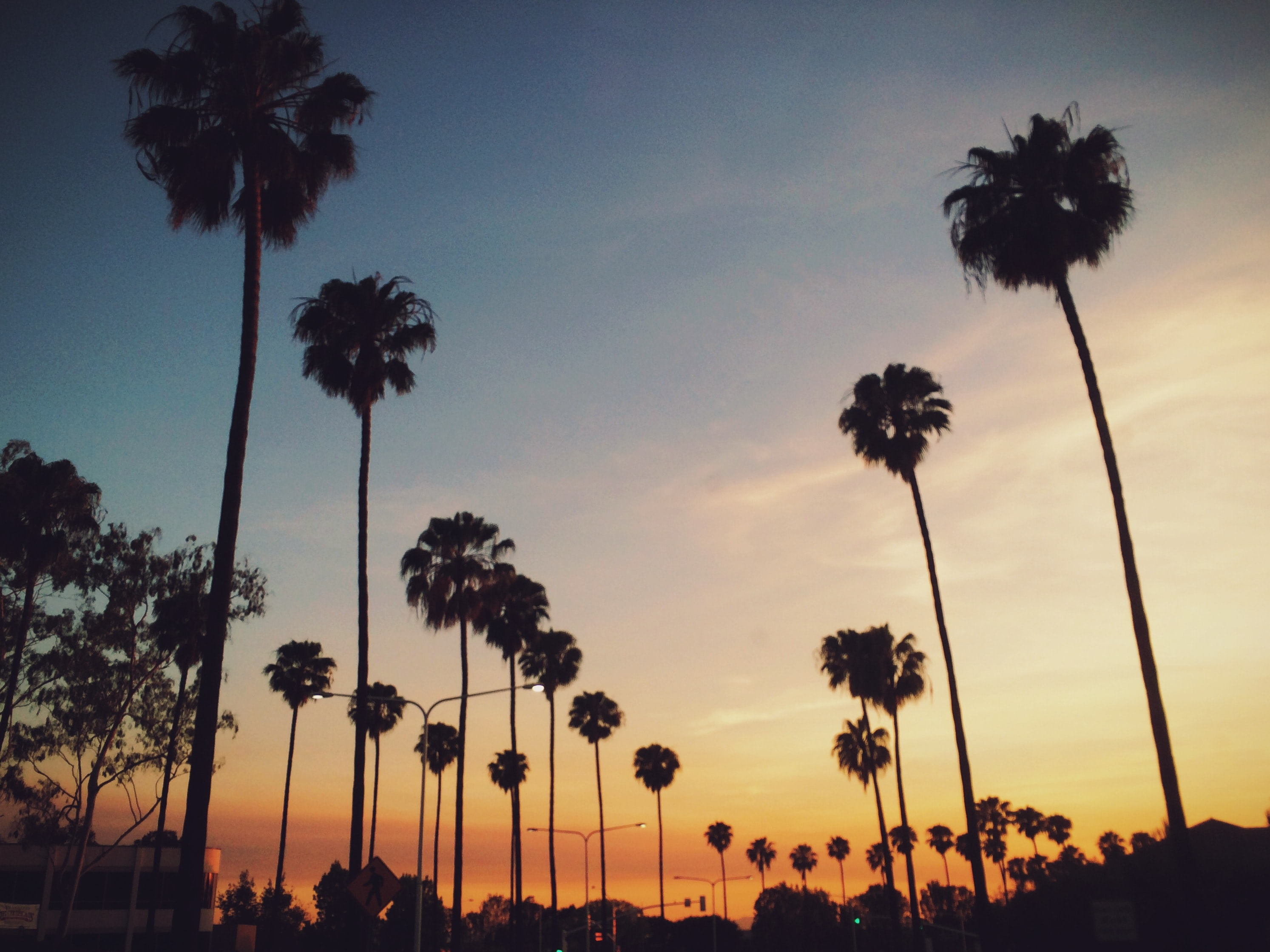 Warm summer evening with palm tree dancing to the wind in the sunset