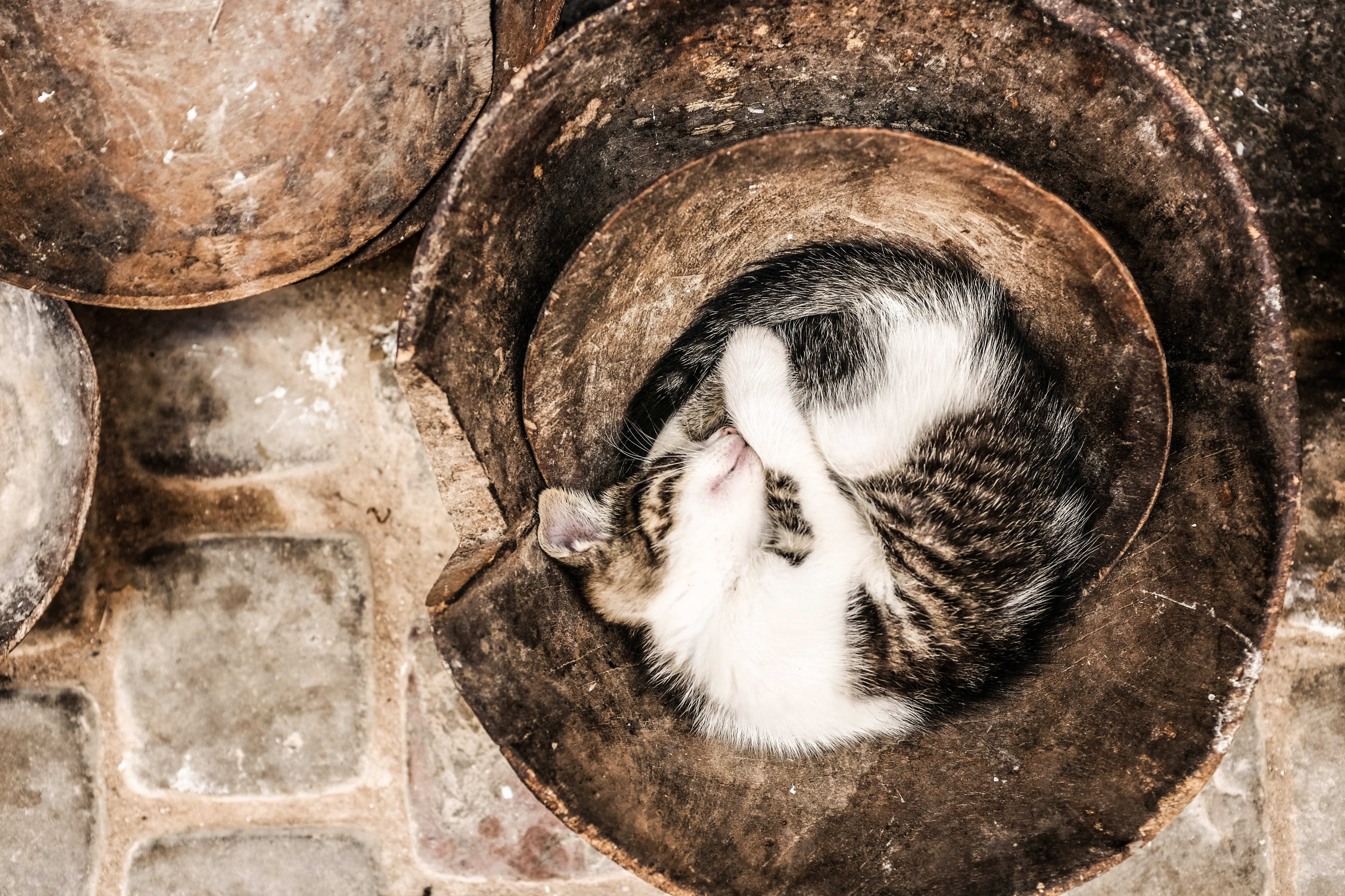 Brown and white kitten curled up sleeping in the bottom of a pot